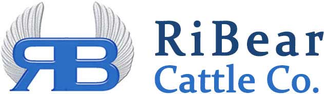 Official RiBear Cattle Company Logo