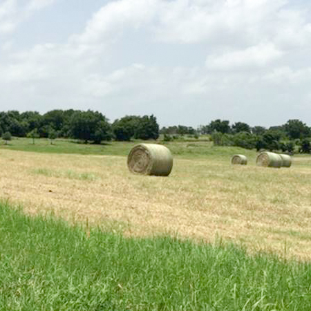 coastal hay for sale in texas