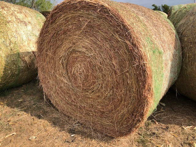 Fertilized Net Wrapped Horse Quality Hay