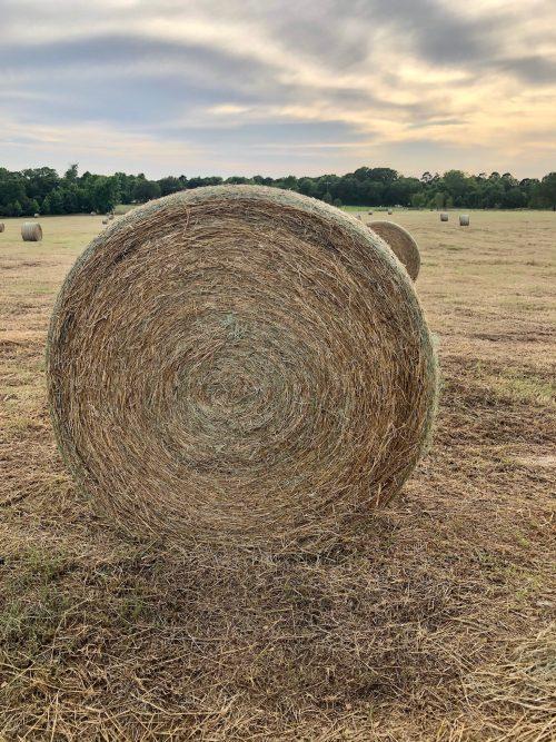 300 4x5.5 round bales of spring 2020 Coastal/Rye hay, #58