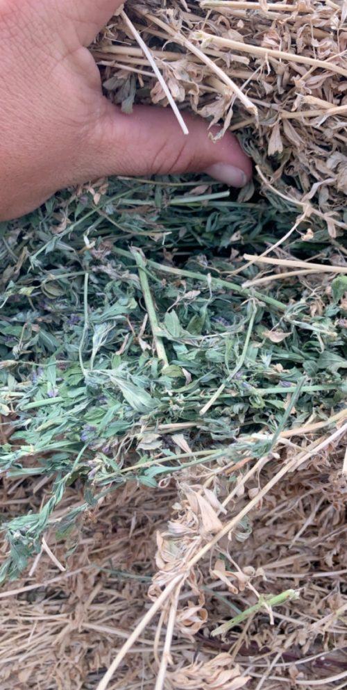 5x6 horse quality Alfalfa round bales, #56