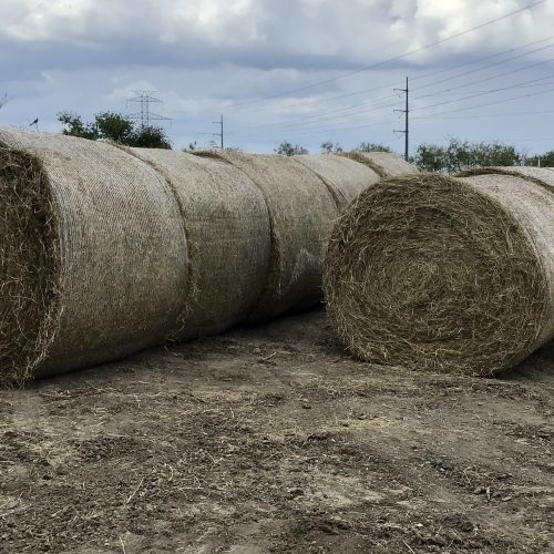 70 Bales of 5x5 Coastal Net Wrapped Hay, #09172