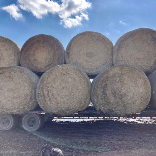 5x6 bales of horse quality coastal bales, #CoastalBales