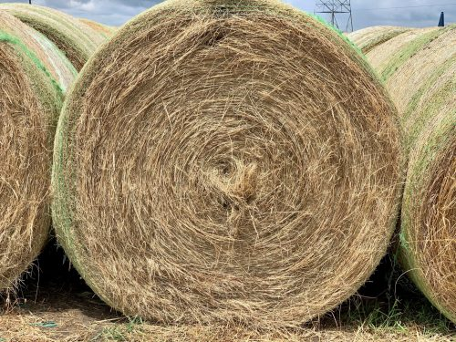 60 bales of 5x6 first cutting 2021 of coastal/native grass mix hay, #0629